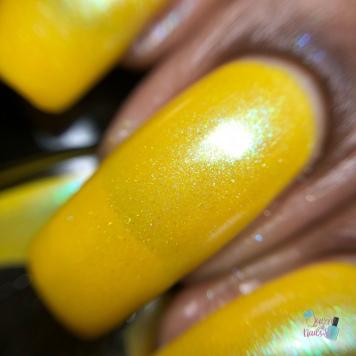 Marigolds - macro