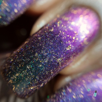 KBShimmer - Beignet Done That - macro